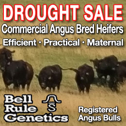 Drought Sale Bell Rule Genetics