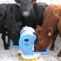 Water Livestock Year-round without heat or power with a FROSTFREE NOSEPUMP